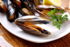 Mussels on the table. Mussels in white dish garnished with parsley royalty free stock photo