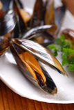 Mussels on the table Stock Images