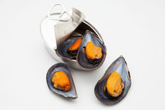 Mussels in Tin Stock Image