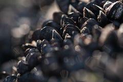 Mussels w bokeh zdjęcie royalty free
