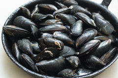 Mussels w skorupie Zdjęcie Stock
