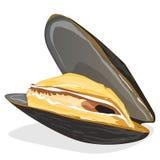 Mussels wektoru ilustracja ilustracji