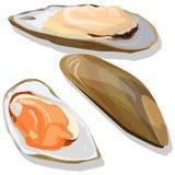 Mussels wektoru ilustracja ilustracja wektor