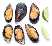 Mussels on a white background. Royalty Free Stock Photos