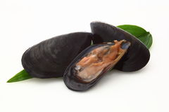 Mussels in white background. Raw mussels in white background Stock Images