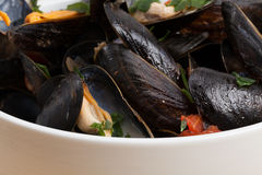 Mussels on a white bowl. Stock Photography