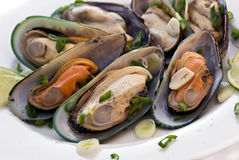 Mussels in white wine Stock Images