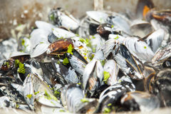 Mussels in white wine close up Royalty Free Stock Photos