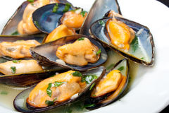 Mussels with white wine and parsley sauce Stock Images