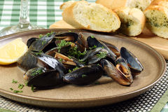 Mussels in white wine sauce Royalty Free Stock Images