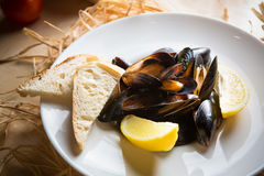 Mussels whith sauce of fresh tomatoes. In white plate Royalty Free Stock Image