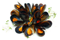 Mussels in wine sauces Stock Image