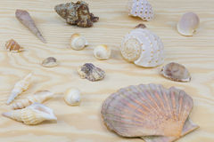 Mussels on wood Stock Images
