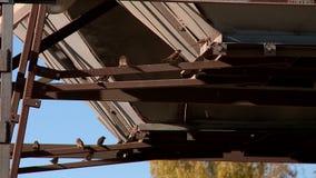 Mussen en duiven die korrel pikken stock videobeelden