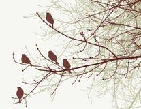 Mussen op de boomtakjes in de lente stock illustratie