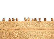 Mussen op een Muur Royalty-vrije Stock Afbeelding