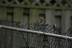 Mussen op een rij op houten omheining royalty-vrije stock foto