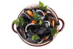 mussla Fotografering för Bildbyråer
