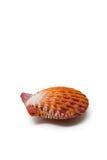 mussla Arkivfoton
