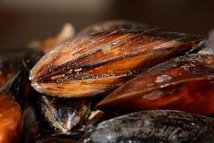 mussla Arkivfoto