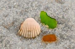 Mussla och exponeringsglas Fotografering för Bildbyråer