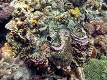 musslajätte arkivbild