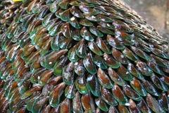 musslastapel Fotografering för Bildbyråer