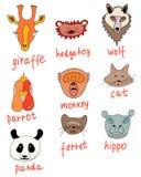 Mussles of animals. Mussles parrot, giraffe, hippo, wolf, hedgehog, cat, panda, monkey, ferret Stock Photos