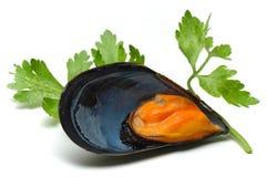 musslor Arkivbilder