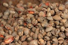 Musslor arkivbild