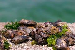 musslor arkivfoton