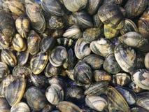 Musslor i fiskmarknad Arkivbild