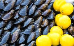Musslor och citron Arkivfoton