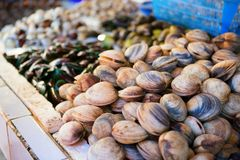 Musslor på en fiskmarknad Arkivfoton