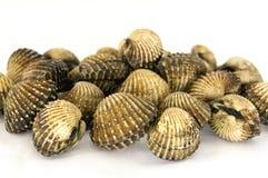 Musslor på en vit bakgrund Royaltyfria Foton