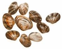 Musslor på en vit bakgrund Arkivfoto