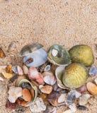 Musslor på strandsand IX royaltyfri fotografi