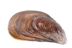 musslor sink till Royaltyfria Bilder