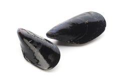 musslor två Royaltyfria Bilder