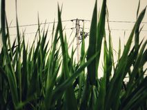A view of a gap in the grass royalty free stock image