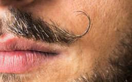 Mustache macro shot. royalty free stock photography