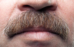 Mustaches and closed mouth of mature caucasian man Royalty Free Stock Images