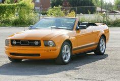 Mustang Stock Image
