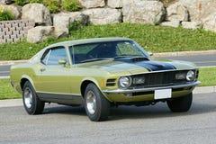 Mustang Stock Photo