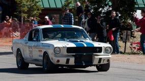 Mustang Stock Fotografie