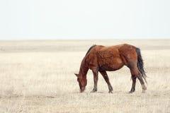 Mustang Royalty-vrije Stock Afbeeldingen