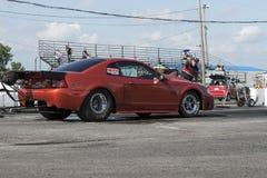 Mustang auf der Bahn Lizenzfreie Stockfotos