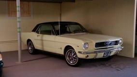 Mustang clássico Imagens de Stock