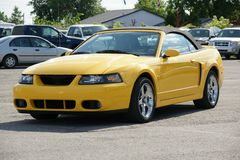 Mustang Cobra Royalty Free Stock Image