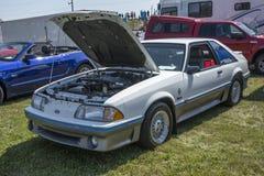 Mustang cobra Royalty Free Stock Images